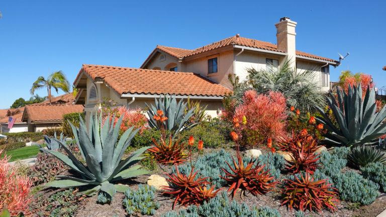Xeriscape landscape Remodel Succulents